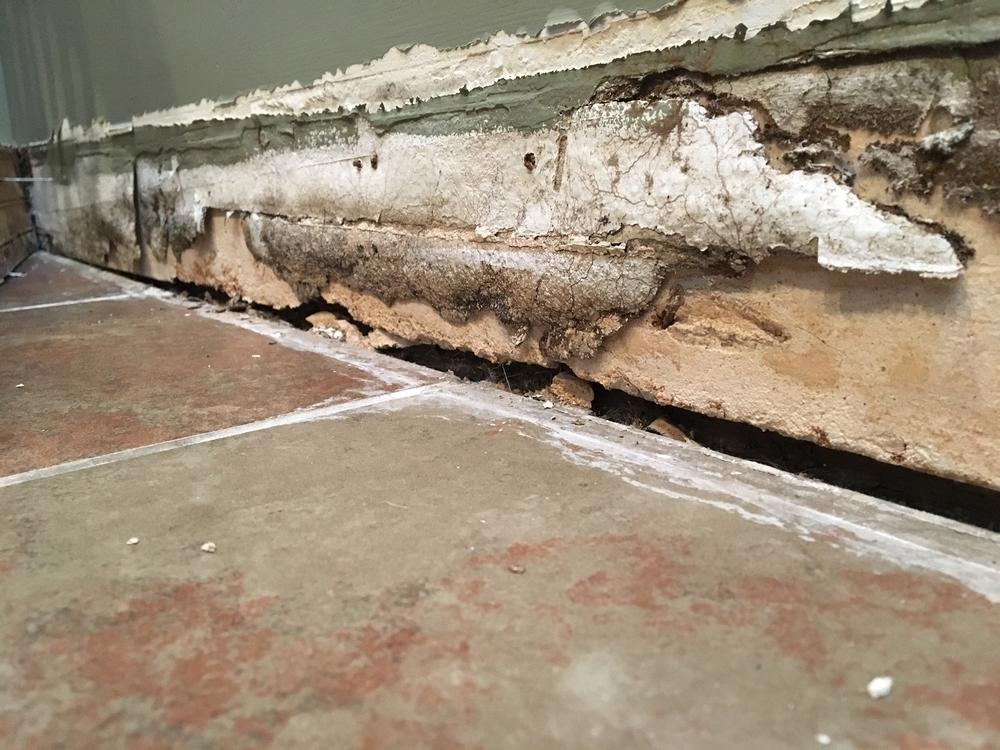 Mold Inspector: Riverside, California