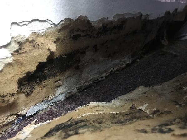 Image Mold Inspector: Corona, California