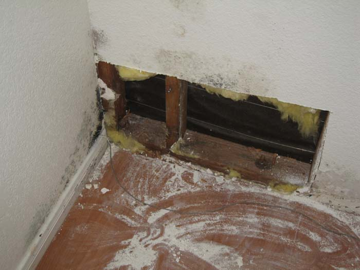 Leak inside a wall caused mold to grow