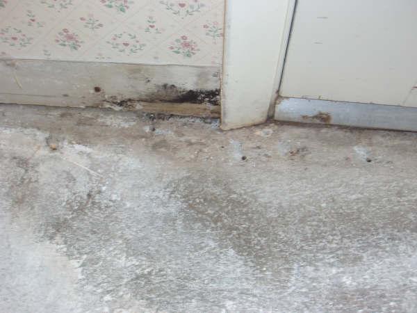 Mold behind wallpaper